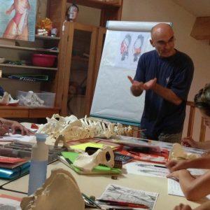 La anatomía es una ciencia que estudia la estructura, forma y relaciones de las diferentes partes del cuerpo de los seres vivos.